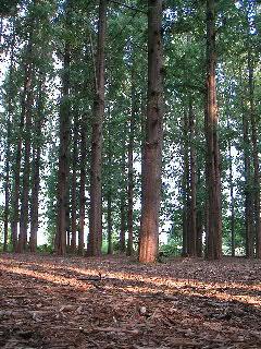 040912_woods.JPG