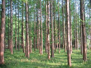 041006_trees.jpg